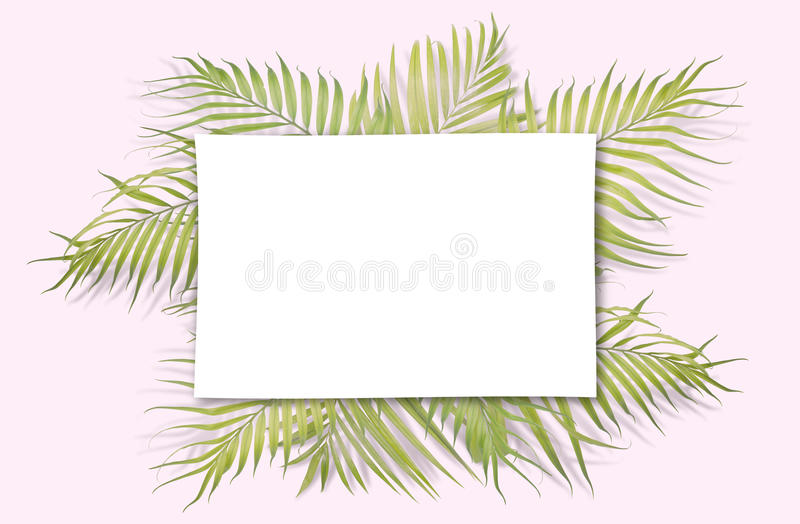 Tropical palm leaves on pink background. Minimal nature. Summer vector illustration