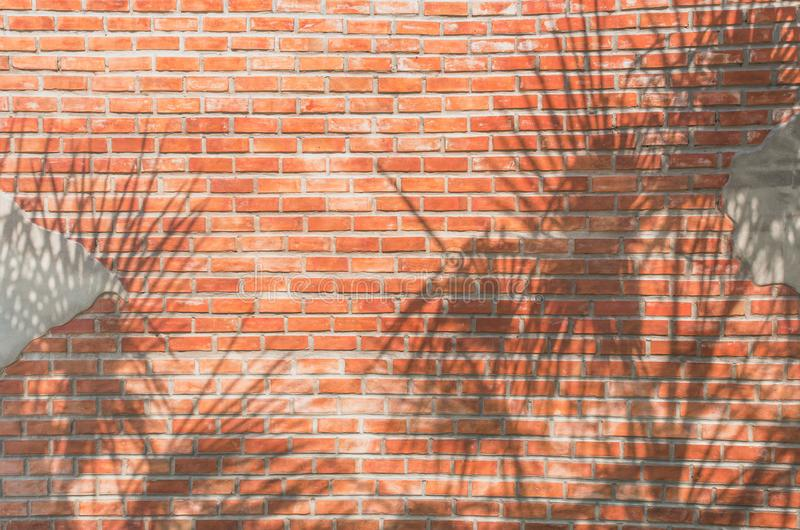 Tropical palm leaves shadows on Red brick wall texture background royalty free stock photography