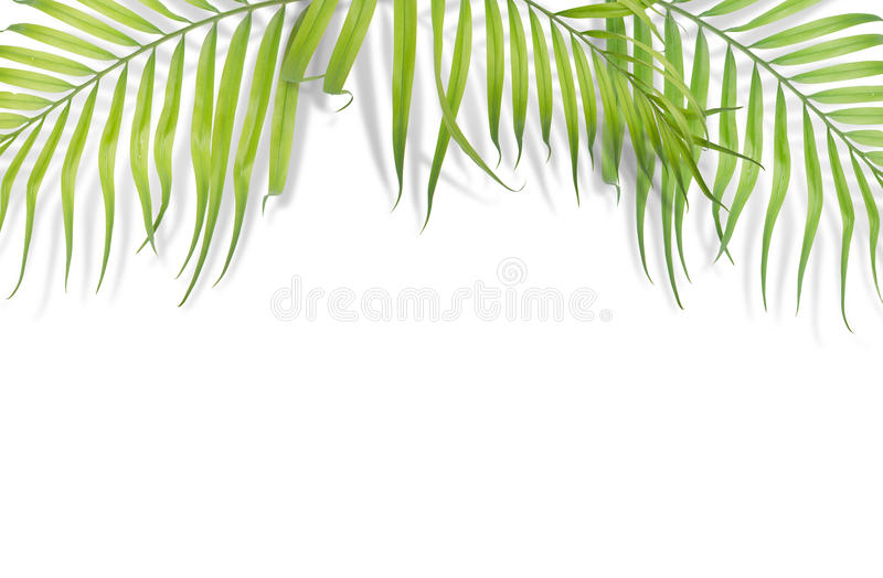 Tropical palm leaves on white background. Minimal nature. Summer stock photo