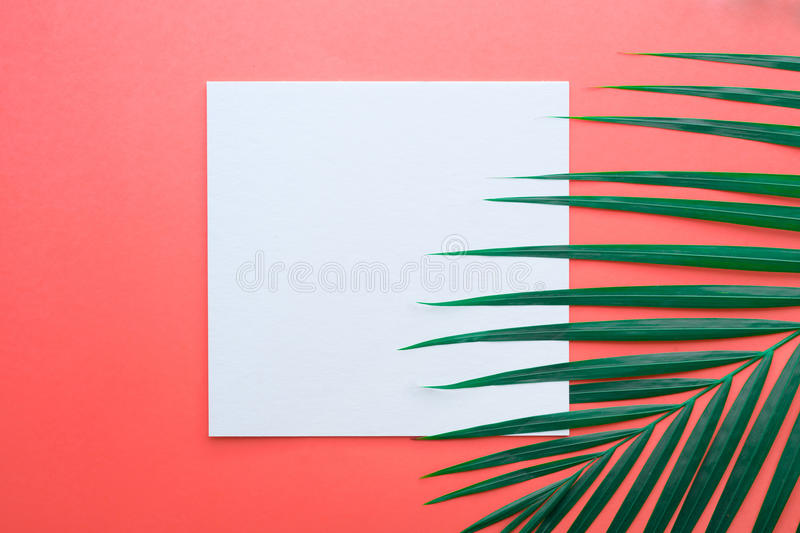 Tropical palm leaves with white paper card Frame on pastel royalty free stock images