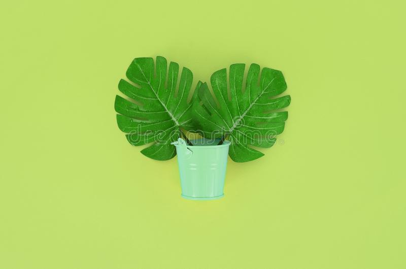 Tropical palm monstera leaf lies in a pastel pail on a colored background. Flat lay trendy minimal composition. Top view.  royalty free stock images