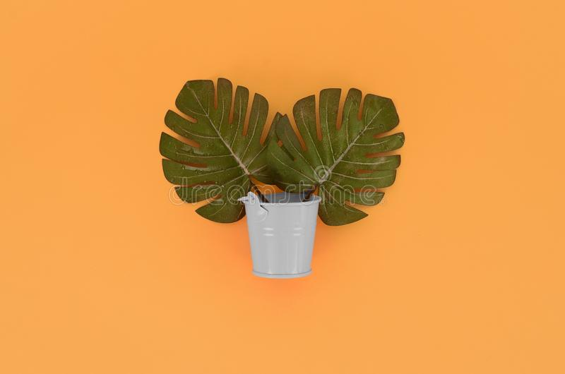 Tropical palm monstera leaf lies in a pastel pail on a colored background. Flat lay trendy minimal composition. Top view.  royalty free stock photos