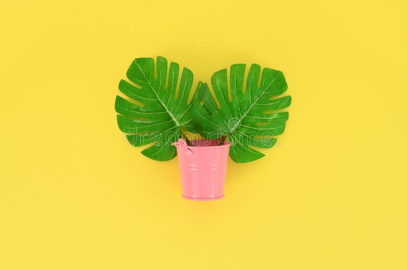 Tropical palm monstera leaves lies in a pastel pail on a colored background. Flat lay trendy minimal composition. Top view stock photography