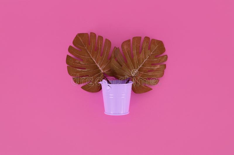 Tropical palm monstera leaves lies in a pastel pail on a colored background. Flat lay trendy minimal composition. Top view.  stock photo
