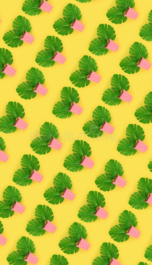Tropical palm monstera leaves lies in a pastel pails on a colored background. Flat lay trendy minimal pattern. Top view.  stock photos