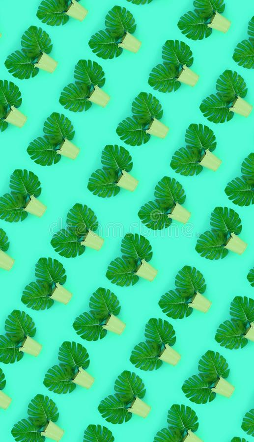 Tropical palm monstera leaves lies in a pastel pails on a colored background. Flat lay trendy minimal pattern. Top view.  royalty free stock photography
