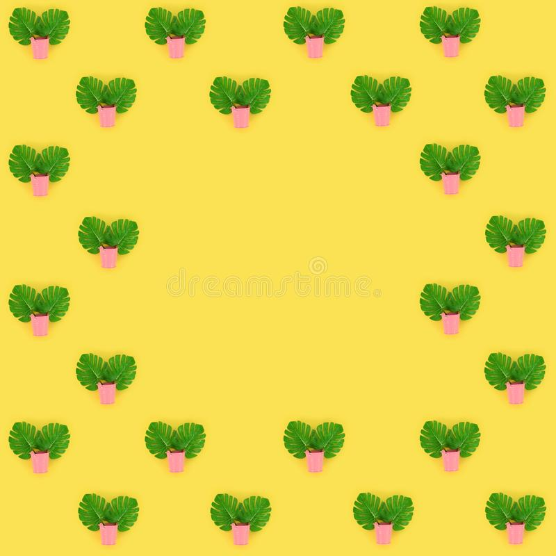 Tropical palm monstera leaves lies in a pastel pails on a colored background. Flat lay trendy minimal pattern. Top view.  stock photo