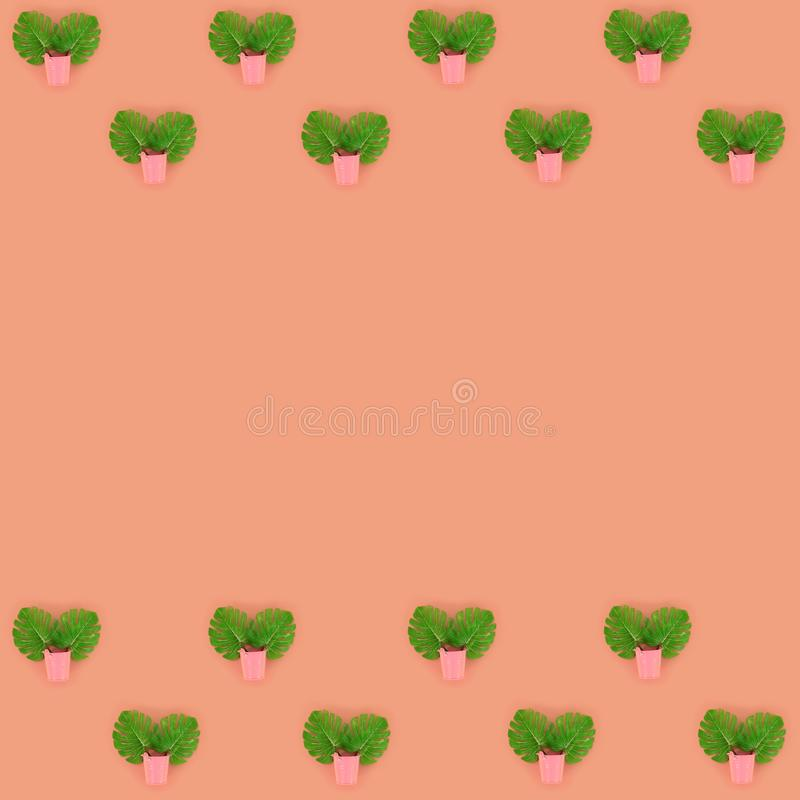 Tropical palm monstera leaves lies in a pastel pails on a colored background. Flat lay trendy minimal pattern. Top view.  royalty free stock images