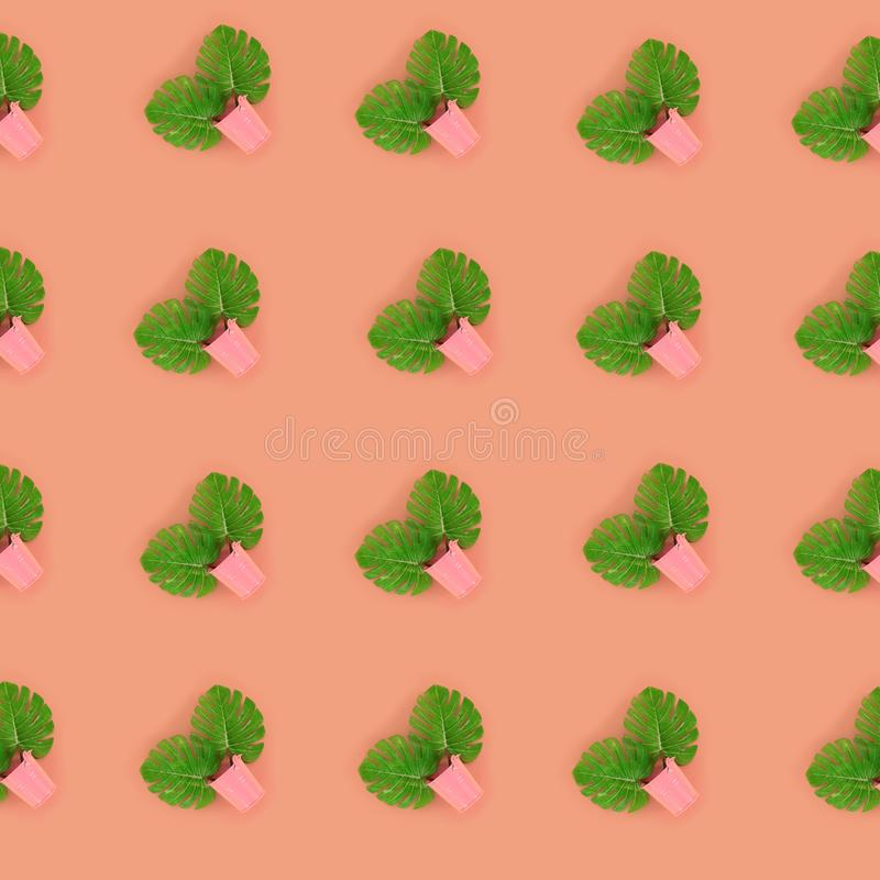 Tropical palm monstera leaves lies in a pastel pails on a colored background. Flat lay trendy minimal pattern. Top view.  stock images