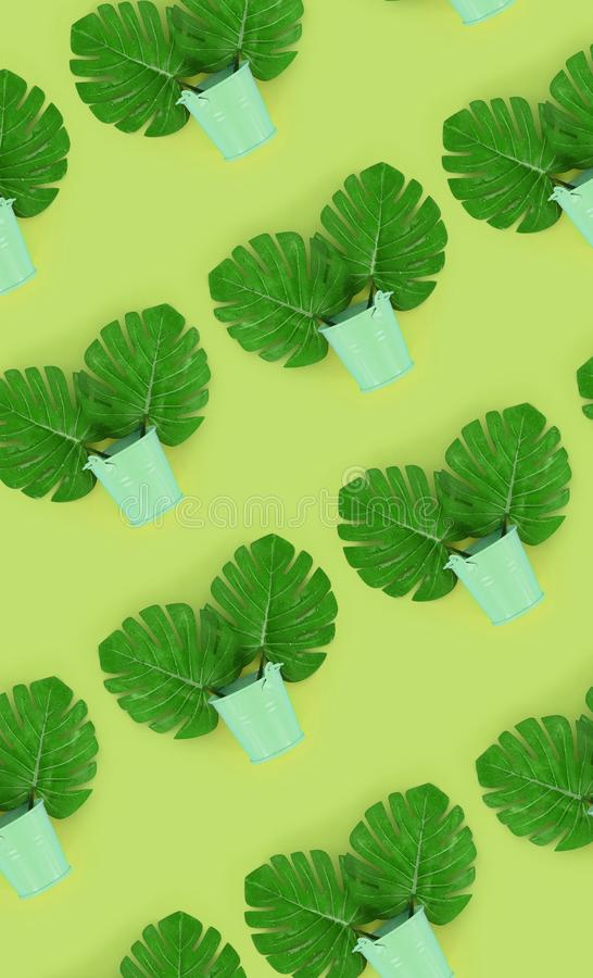 Tropical palm monstera leaves lies in a pastel pails on a colored background. Flat lay trendy minimal pattern. Top view.  royalty free stock photos