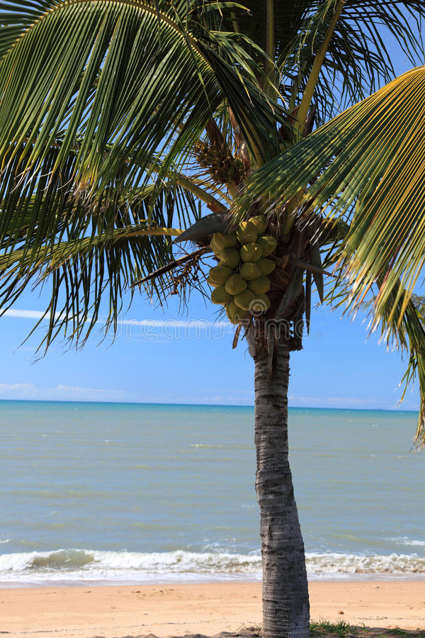 Download Tropical Palm Tree At The Beach Stock Image - Image: 15626649