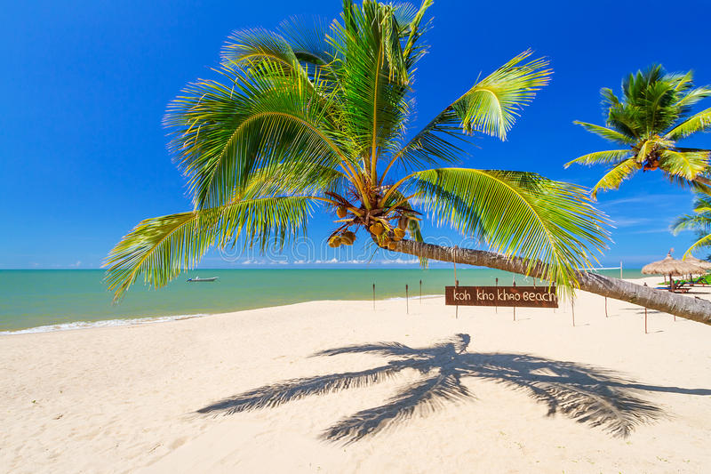 Tropical Palm Tree On The Beach Of Koh Kho Khao Island Royalty Free Stock Images