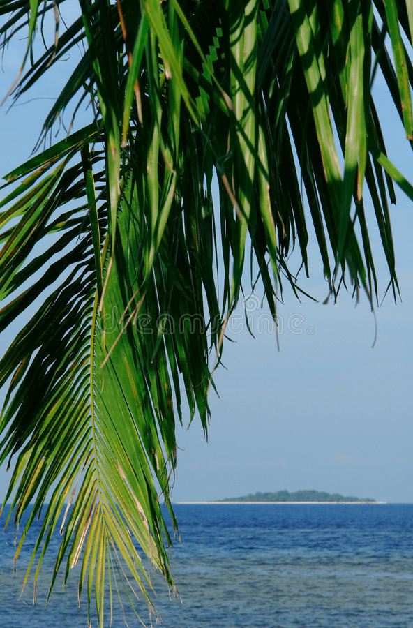 Download Tropical Palm Tree And Island Stock Photo - Image: 1835198