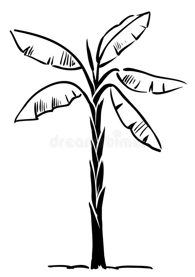 Download Tropical Palm Tree Isolated On White Background Stock Vector - Image: 24588272