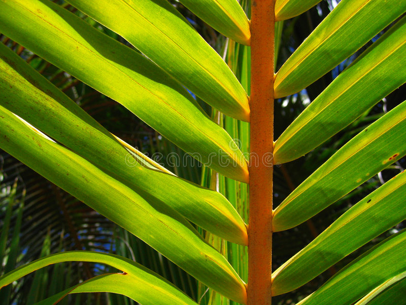 Tropical Palm Tree Leaf Royalty Free Stock Photos