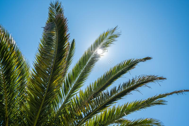 Tropical palm tree leaves in summer with sunlight glinting between branches stock image