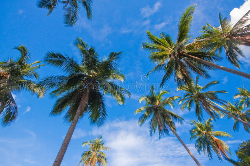 Tropical palm tree leaves at sunny day stock photo