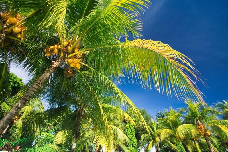 Tropical Palm Tree Paradise Royalty Free Stock Photos
