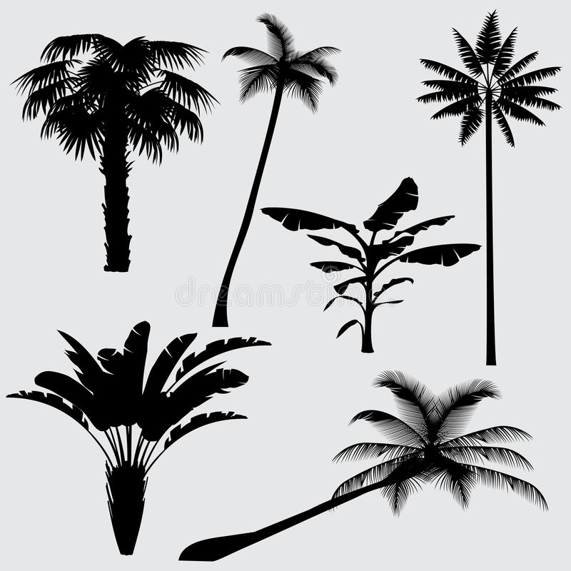 Tropical palm tree vector silhouettes isolated on white background stock illustration