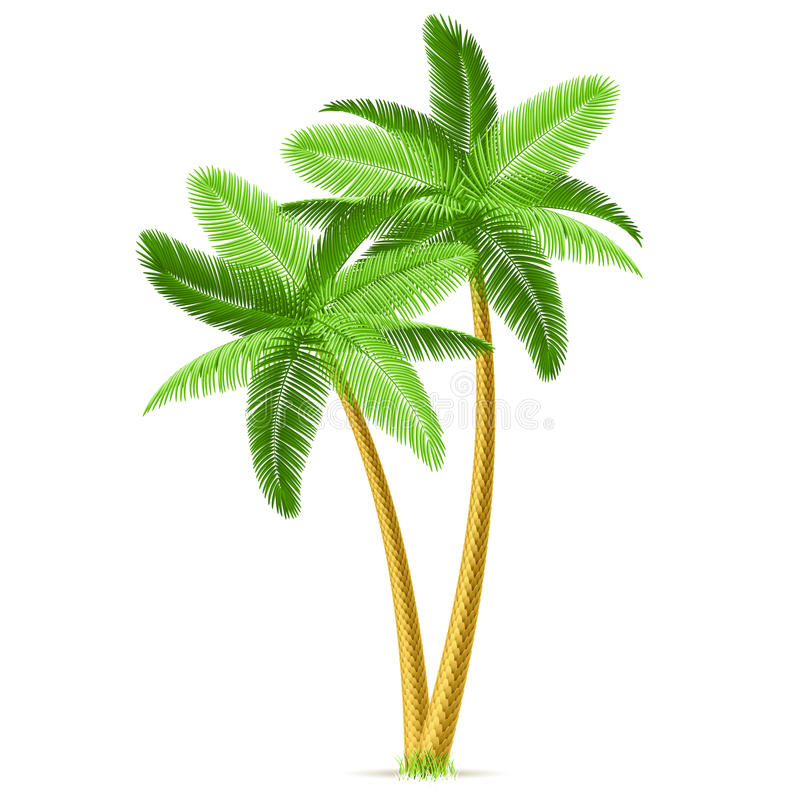 Tropical palm trees stock illustration