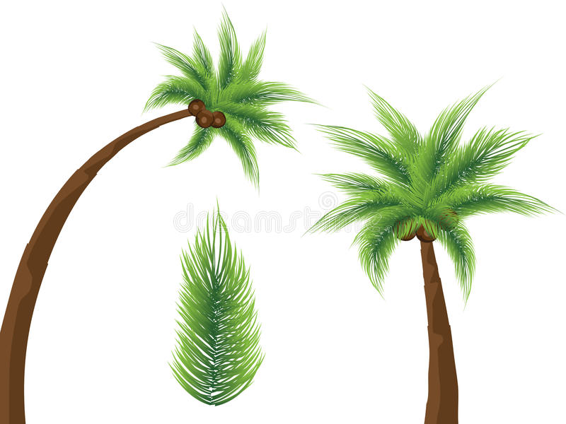 Download Tropical palm trees stock vector. Image of branch, high - 15339735