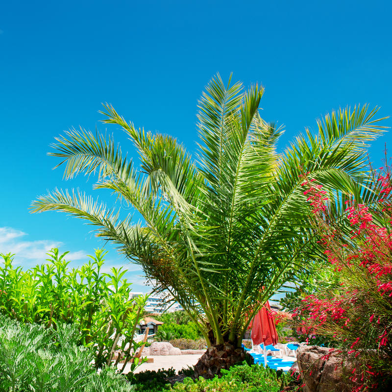 Download Tropical palm trees stock image. Image of high, natural - 33547397