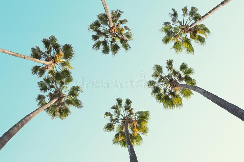 Tropical palm trees on clear summer sky background.  Toned image.  stock photography