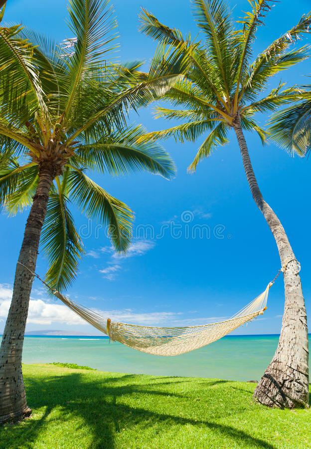 Tropical Palm Trees and Hammock stock photo