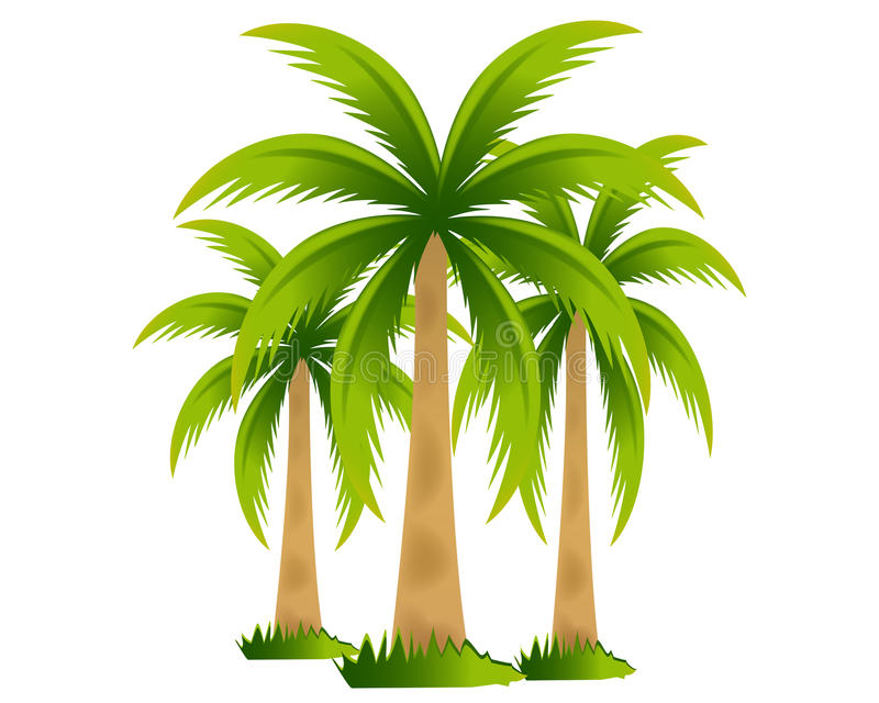 Tropical palm trees royalty free illustration