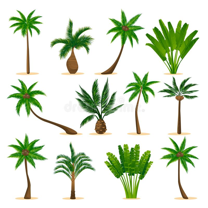 Tropical palm trees set, isolated on white background. Vector flat cartoon illustration. Jungle plants design elements vector illustration
