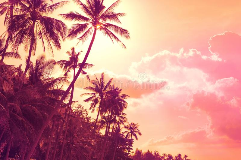 Tropical palm trees at sunset stock photos