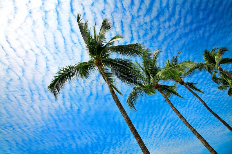 Tropical palms in Mexico stock image
