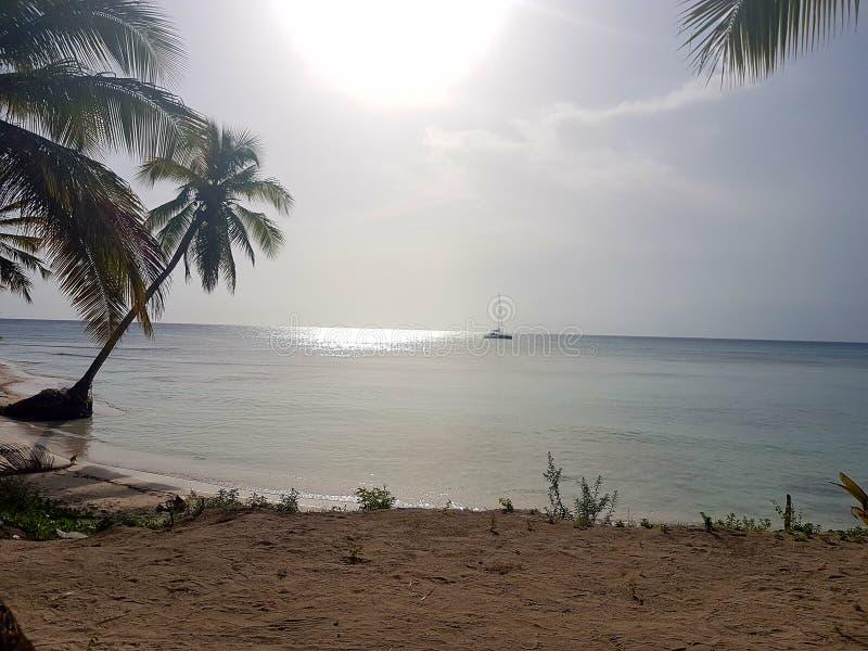 Tropical palmtrees  sand sun boat stock photo