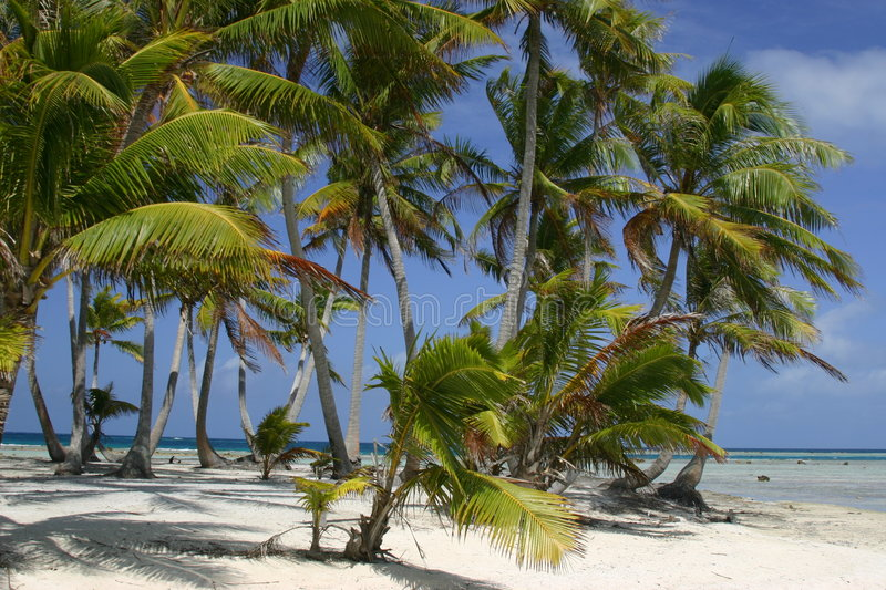 Download Tropical Paradise stock photo. Image of clouds, resort - 156228