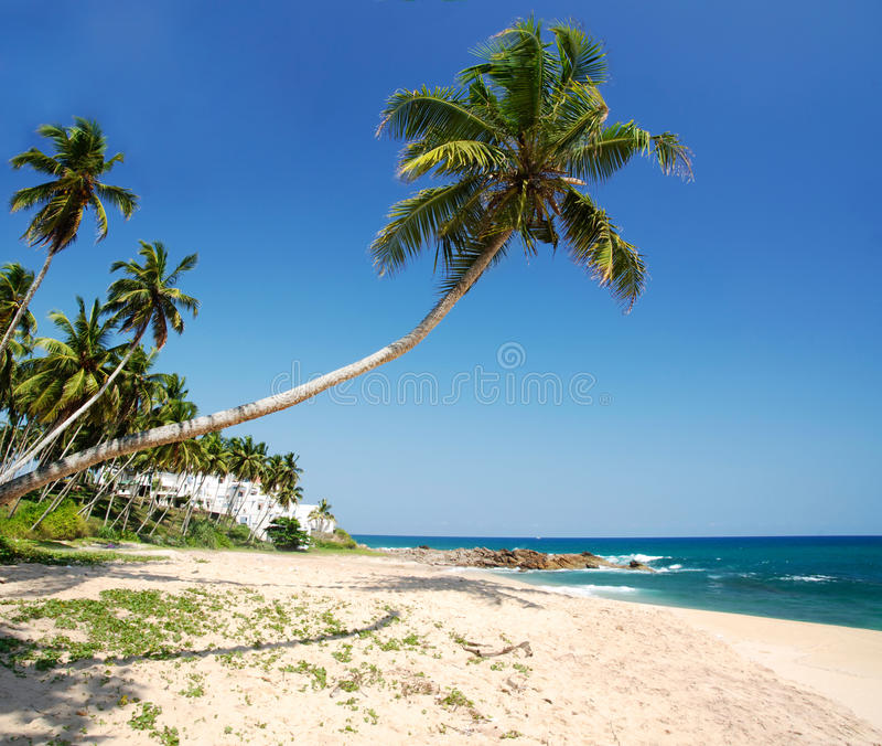 Download Tropical Paradise Royalty Free Stock Photos - Image: 21833308
