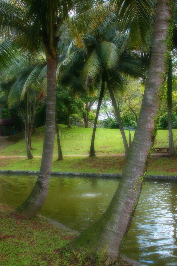 Tropical Paradise Free Stock Image