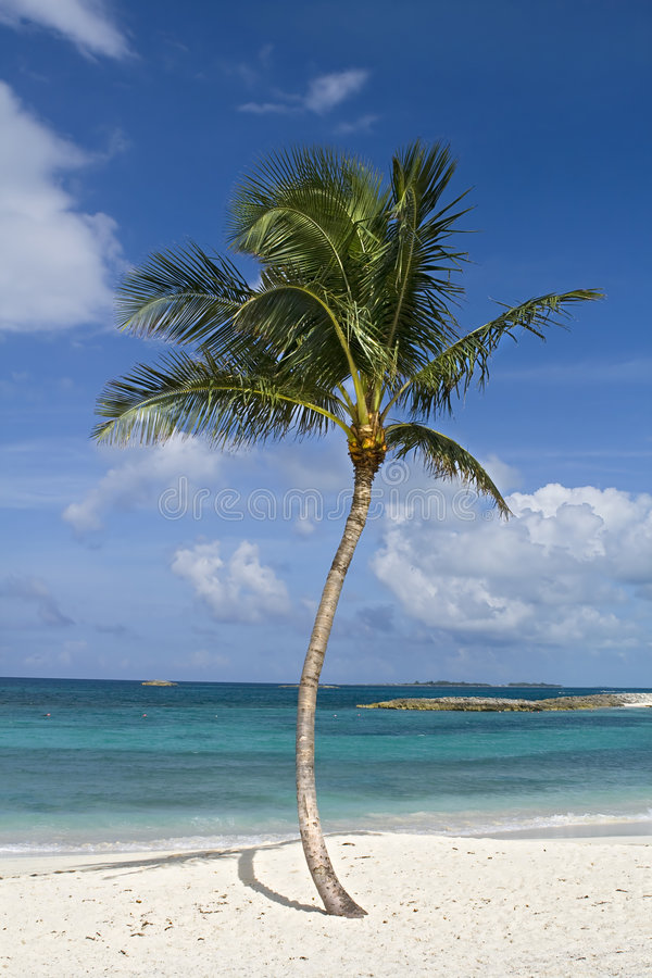 Download Tropical paradise stock photo. Image of island, bushes - 6991274