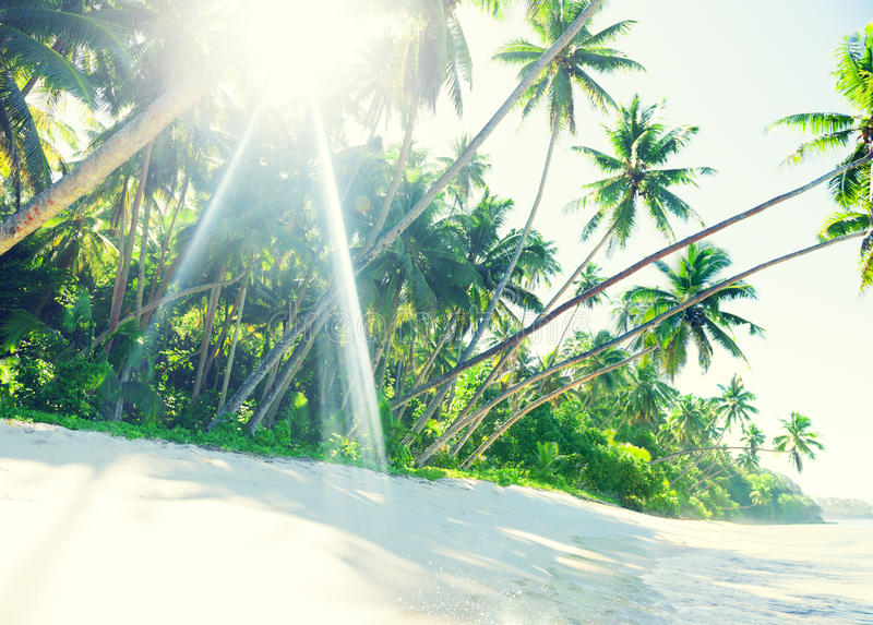 Download Tropical Paradise Beach With Palm Tree Stock Photo - Image: 41402218