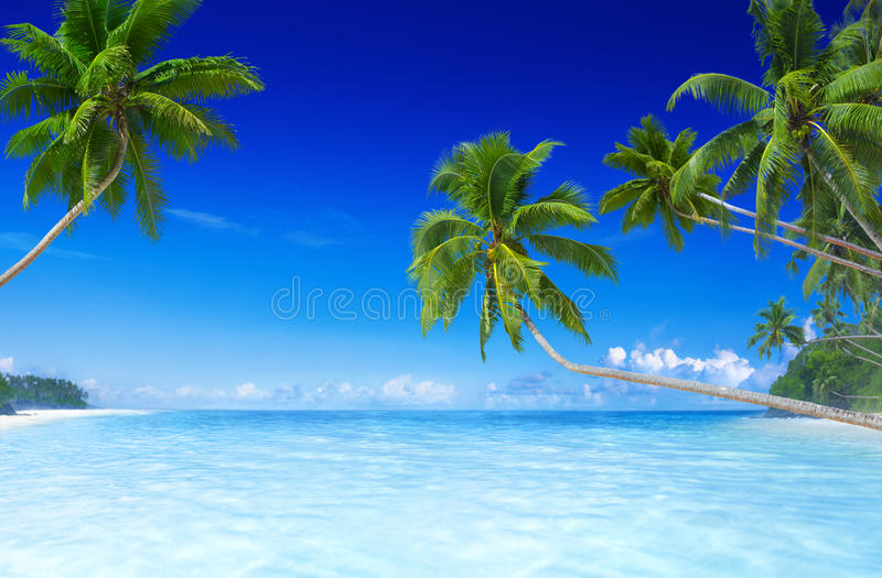 Tropical Paradise Beach With Palm Tree Stock Photo