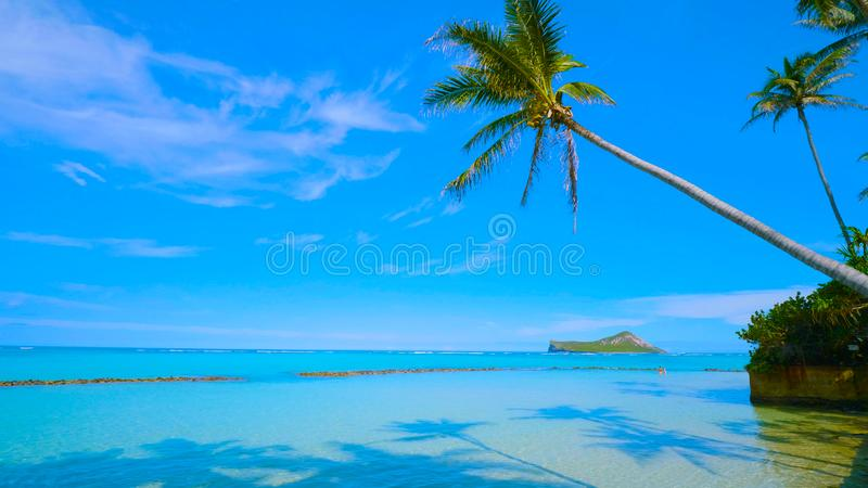 Tropical paradise beach with white sand and coco palms travel tourism wide panorama background concept in hawai 2019 royalty free stock photos