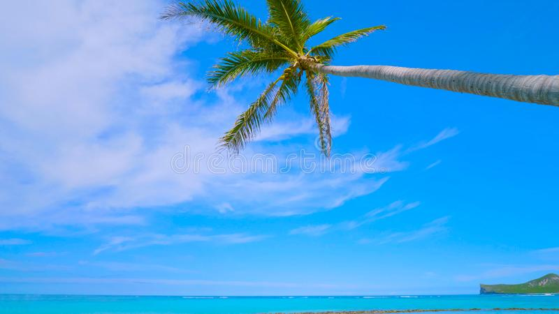 Tropical paradise beach with white sand and coco palms travel tourism wide panorama background concept in hawai 2019 stock photography