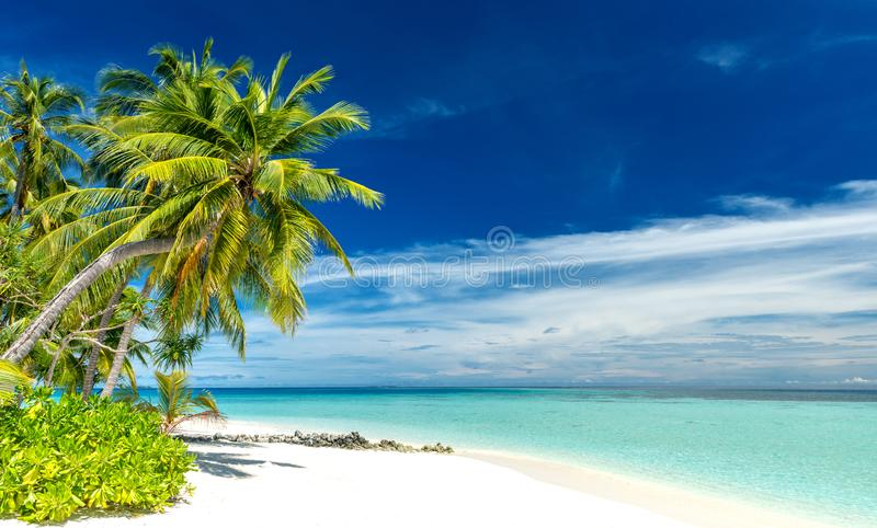 Tropical paradise beach on the maldives royalty free stock photos