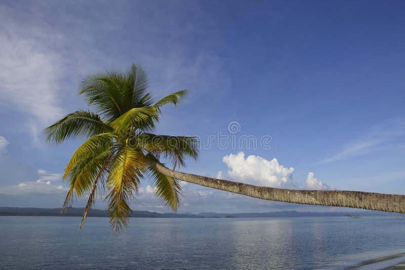Tropical paradise island coconut palm stock photos