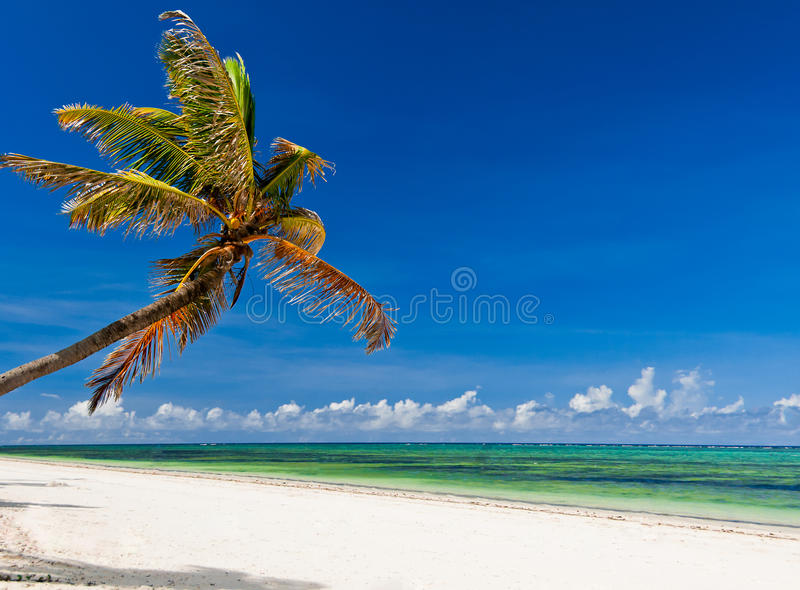 Tropical Paradise royalty free stock photos