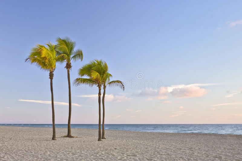 Tropical paradise in Miami Beach Florida with palm royalty free stock image