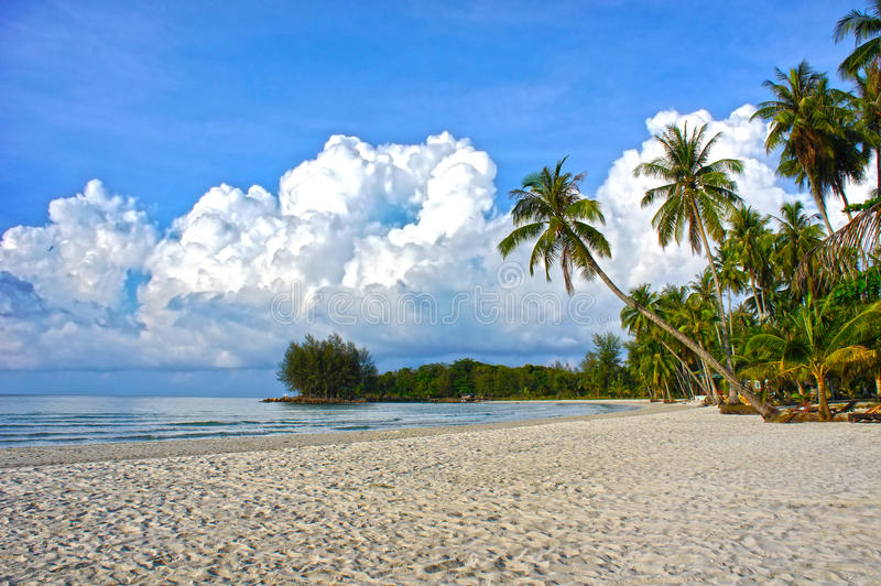 Tropical Paradise Nature, Sea Water And Palm Trees Stock Photo
