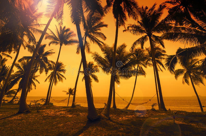 Tropical paradise: sunset at the seaside - dark silhouettes of p royalty free stock image