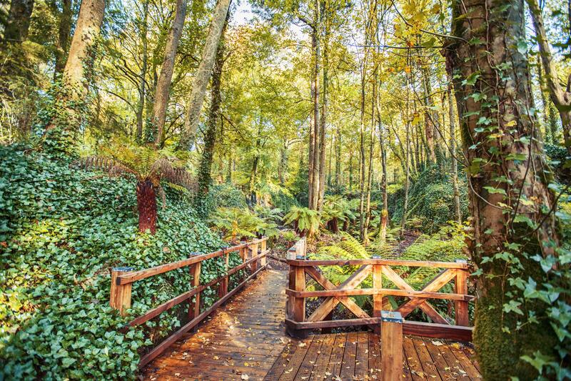 Tropical part in water garden near village Blarney royalty free stock photos