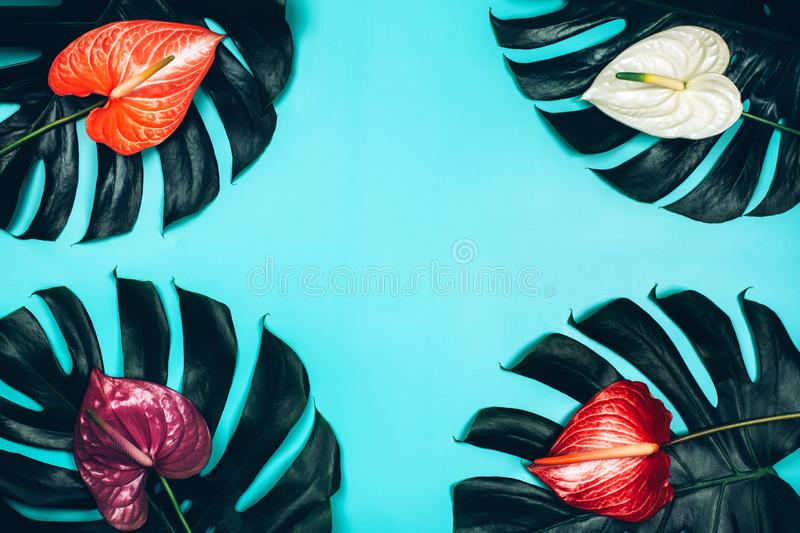 Tropical pattern of monstera leaves and anthurium flowers on blue background. stock image