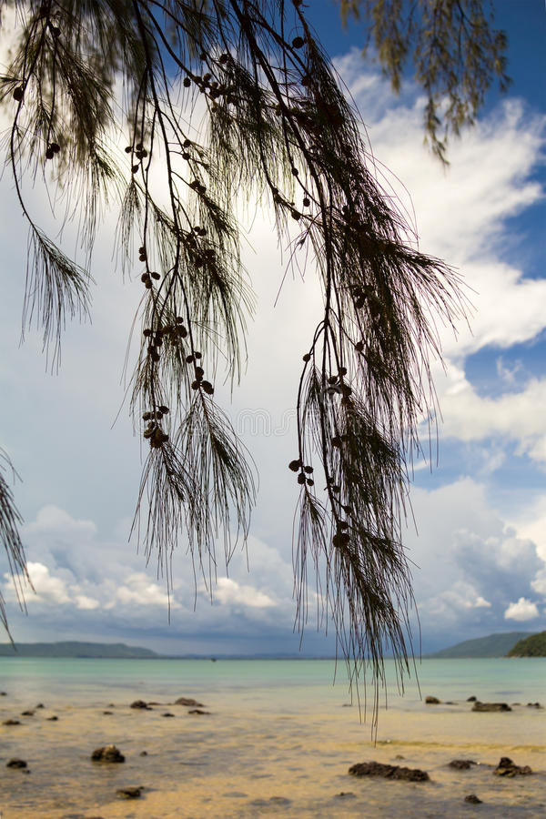 Tropical pine branches with cones on a background of a sea landscape. royalty free stock photo